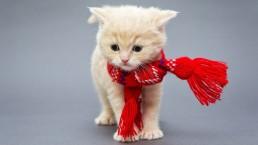 Vétérinaire Stevens Koekelberg - Bruxelles | Vers gastro-intestinaux chez le chien et le chat